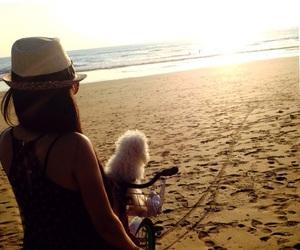 beach, pet, and costarica image