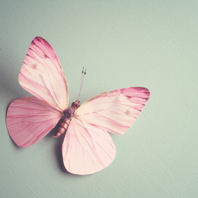 butterfly, pink, and pastel image