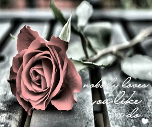 couples, roses, and love image