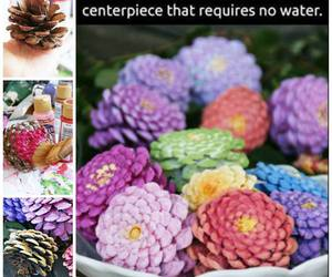 colors, diy, and pinecones image