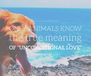 quote, animal, and easel image