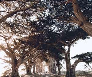 road, roadtrip, and trees image
