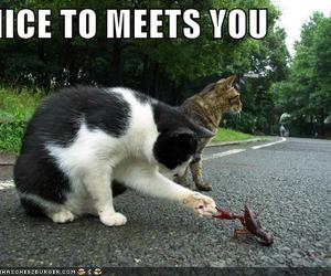 cat, funny, and nice image
