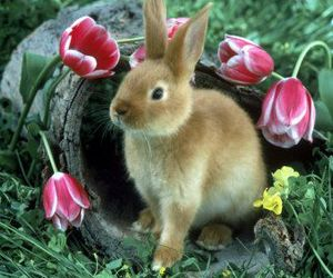 flowers and rabbit image