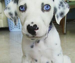 dog, pets, and animal image