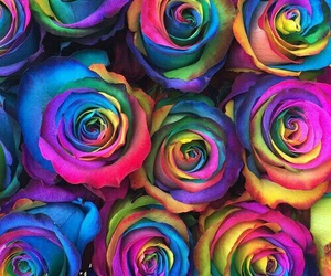 flowers, background, and colors image
