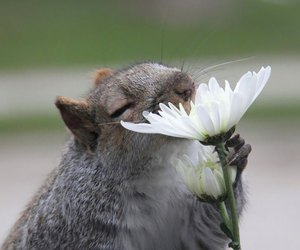 flowers, animal, and squirrel image