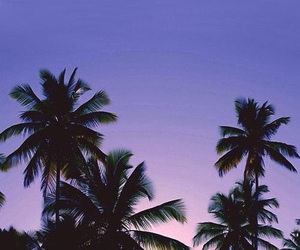 palm trees, beach, and purple image