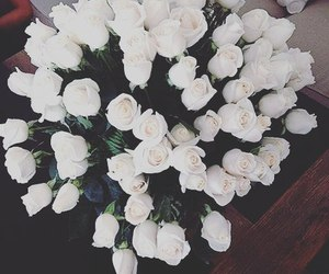 white, flowers, and roses image