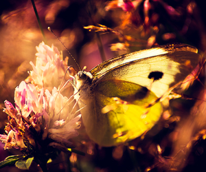 butterfly, summer, and photography image