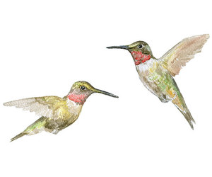 art, etsy, and hummingbirds image