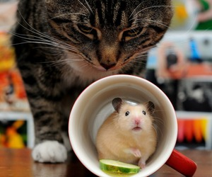cat and mouse image