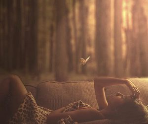 butterfly, photography, and pretty image
