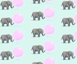 babies, elephants, and elefantes image