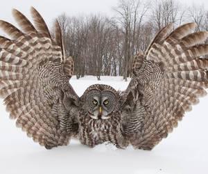 owl, bird, and snow image