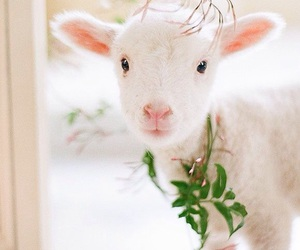 lamb, cute, and spring image