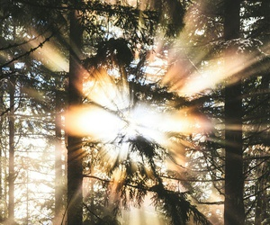 beautiful, rays, and discovering image