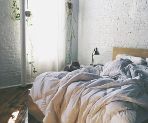 bedroom and cat image
