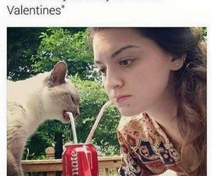 cat, funny, and valentine image