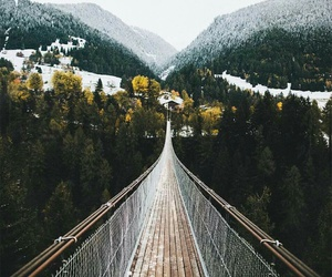 bridge, adventure, and forest image