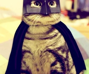 cat, batman, and batcat image