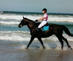 beach, gallop, and horse image