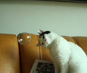 cat, bubbles, and animal image