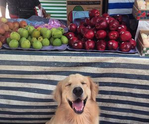 dog and fruit image