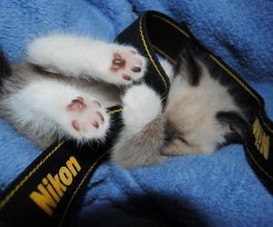 cute, cat, and nikon image
