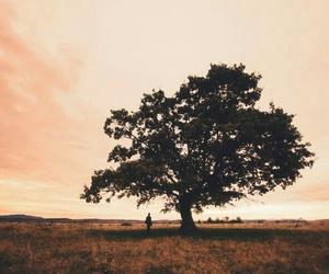 beautiful, cute, and scenery image