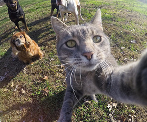 cat, dog, and selfie image
