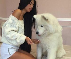 dog, animal, and hair image