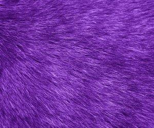 purple and fur image