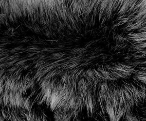 black and texture image