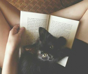 cat and libros image
