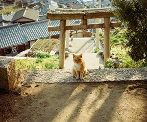 animal and japan image