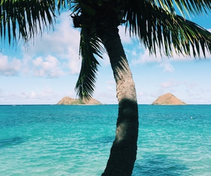 summer, beach, and palm trees image