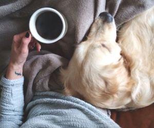 dog, girl, and coffee image