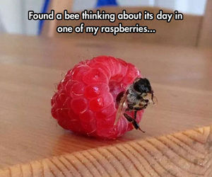 funny, bee, and raspberry image