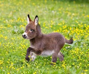 donkey, animal, and cute image