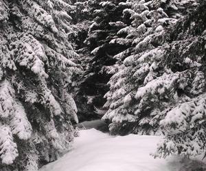 cold, ski, and snow image