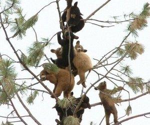 animals, bears, and tree image