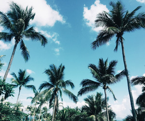 Dream, palms, and summer image