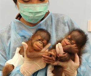 baby, monkey, and vet image