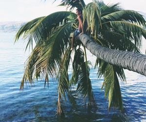 palm trees, palms, and summer image