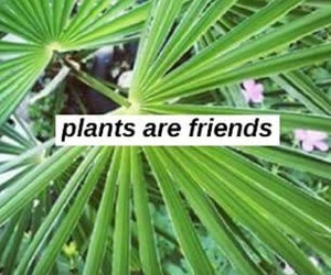 plants, quote, and tumblr image