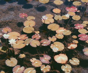 theme, flowers, and water image