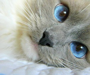 cat, cute, and eyes image