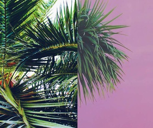creature, palmtrees, and vibes image