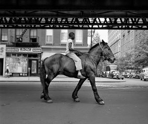 horse, black and white, and vivian maier image